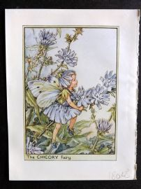 Cicely Mary Barker C1940s Flower Fairy Print. Chicory Fairy